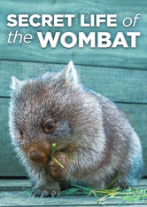 Secret Life of the Wombat Netflix ZA (South Africa)