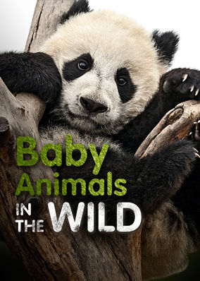 Baby Animals in the Wild - Season 1