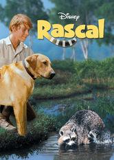 Rascal Netflix AW (Aruba)
