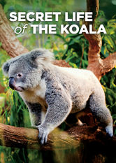 Secret Life of the Koala Netflix ZA (South Africa)